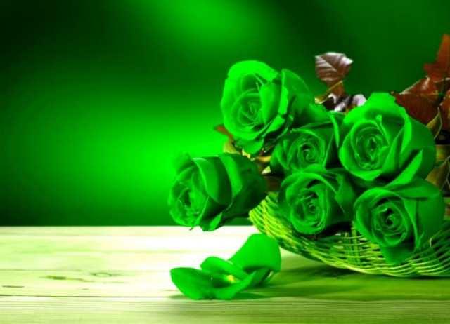 Mawar Hijau yang Mentereng, Fakta Tentangnya dan Filosofinya!