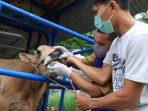 Pelaksanaan Kurban di Tengah Pandemi Diperketat dengan Protokol Kesehatan
