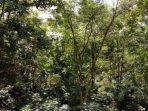 Bisnis Kehutanan Beralih dari Timber Management ke Forest Management