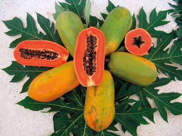 buah pepaya merah delima