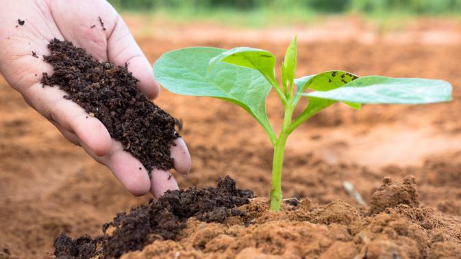 Cara Membuat Media Tanam Terbaik untuk Sayuran Segar
