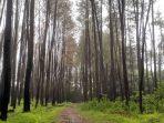 Hutan Pinus Tala-Tala Maros, Sensasi Layaknya di Musim Gugur dan Semi
