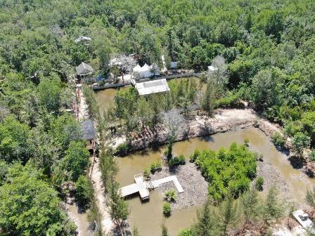 Momentum Hari Mangrove Sedunia, Pemerintah Gelorakan Semangat Penanaman