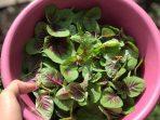 Urban Farming, Solusi Pertanian Berkelanjutan Masyarakat Perkotaan