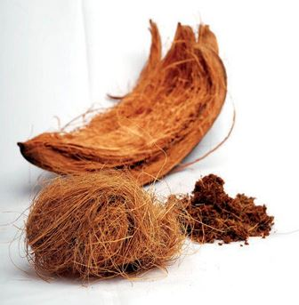 media sabuk kelapa