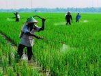 Jangan Asal Semprot, Begini Dampak Penggunaan Pestisida pada Lingkungan dan Manusia
