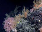 Lebih Dekat dengan 5 Spesies Laut Indonesia yang Baru Ditemukan