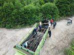 Pembalak Liar Hutan Mangrove Diringkus Gakkum KLHK di Langkat Sumut