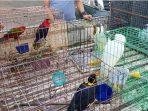 Peredaran Satwa Liar Dilindungi di Sulawesi Utara Mulai Ditertibkan