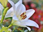 7 Tanaman Hias dengan Fungsi Herbal dan Cara Meramunya!