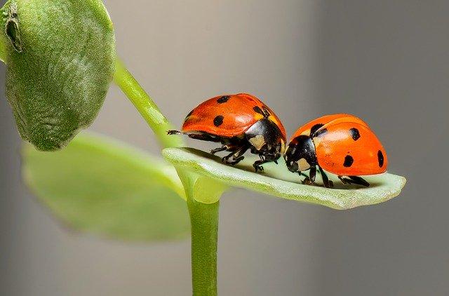 Bagaimana Hubungan dan Interaksi Antara Serangga dengan Tumbuhan