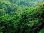 Negara-Negara ASEAN Bahas Peningkatan Upaya Pengelolaan Kawasan Lindung