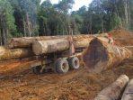 Omnibus Law Berpotensi Gilas Hak-hak Buruh dan Mengancam kelestarian hutan