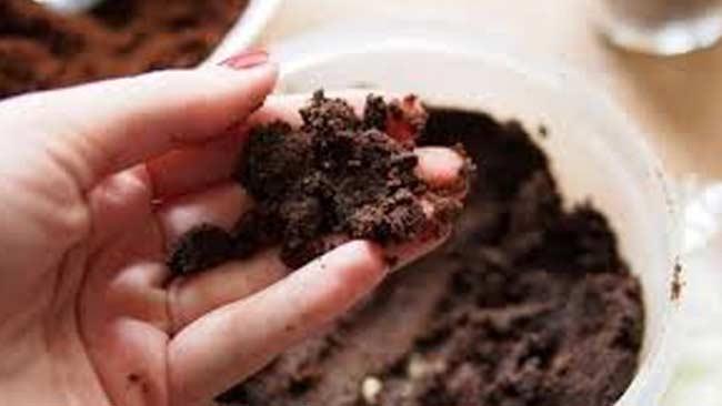jangan-dibuang-sembarangan-ampas-kopi-bisa-menyuburkan-tanaman