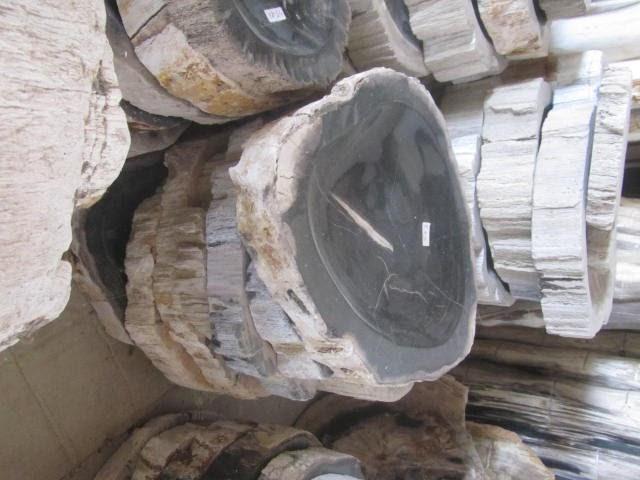 Fosil Kayu, Bongkahan Tumbuhan Purba dan 3 Fakta Menarik di Baliknya