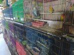 Panggung Terbuka di Pasar Gelap Satwa Liar Dilindungi di Sulawesi Selatan
