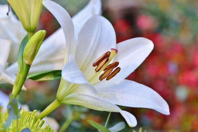 Selain Menawan, 5 Tanaman Hias dengan Kembang Putih Ini Juga Mustajab!