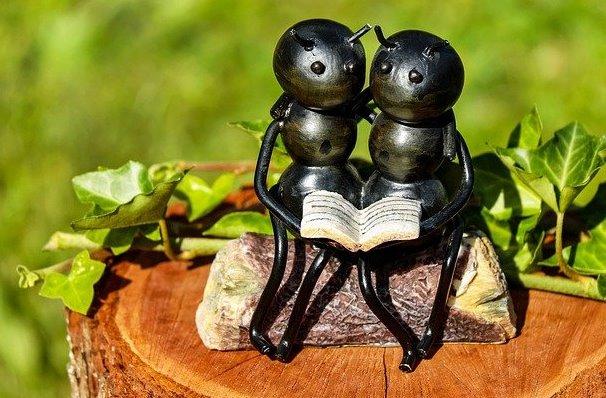 6 Fakta Perihal Semut yang Tak Terpikirkan, Mencengangkan!