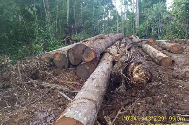 Masyarakat Adat Kalimantan Tengah Pantau Peredaran Kayu Ilegal
