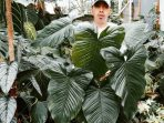 Philodendron Verrucosum, Tanaman Hias dengan Daun Istimewa Plus Cara Merawatnya