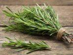 Rosemary, Tanaman Herbal Aromaterapi dengan 8 Manfaat Mengejutkan!