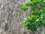 7 Poin Penting yang Perlu Diperhatikan dalam Konsumsi Obat dari Tanaman Bunga