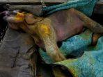 Bayi gajah Sumatera Ditemukan Mati Setelah Terjebak di Kubangan Lumpur