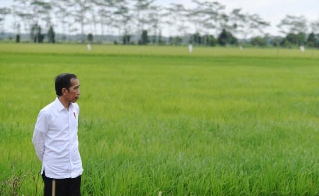 Mengantisipasi Dampak Food Estate terhadap Hutan Alam dan Lahan Gambut