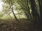 Deforestasi dan Kerusakan Ekosistem Memicu Merebaknya Wabah