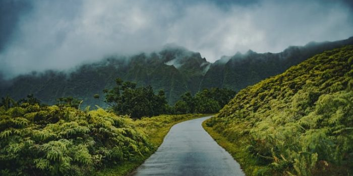 Hutan Hujan, Pengertian, Manfaat dan Fakta Menarik yang Penting Diketahui