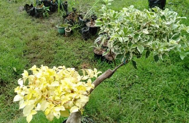 Ini Beda Tanaman dan Tumbuhan serta Hubungan Timbal Baliknya dengan Lingkungan!