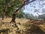 Makassar Zona Merah Bencana Ekologis
