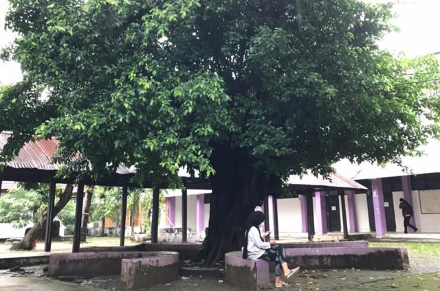 Pohon Beringin, Antara Mitos dan Manfaatnya yang Jarang Diketahui