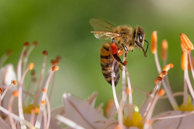 Terdampak Perubahan Iklim, Populasi Lebah Menurun Drastis