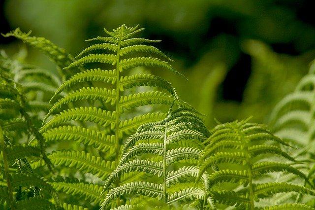 beda tanaman dan tumbuhan