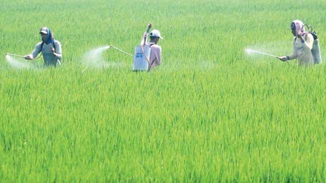 4 Prinsip Penggunaan Pestisida Agar Aman dan Berpihak pada Lingkungan