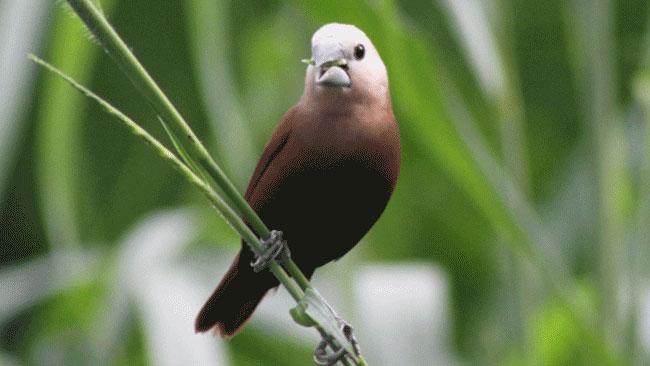 Di Antara 50 Miliar Burung Liar, Ini 4 Spesies Burung Paling Dominan!