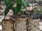 Ecopolybag, Pengganti Polybag Plastik yang Lebih Ramah Lingkungan