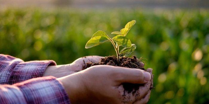 Hari Lingkungan Hidup Sedunia 2021, Restorasi Ekosistem dan Aksi Kita!