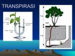 Memahami Proses Transpirasi dan Fungsinya bagi Tumbuhan
