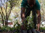 Ghana Hijau, Proyek Fantastik dengan Menanam 5 Juta Pohon dalam Sehari