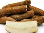 Ubi Kayu, Makanan Pinggiran yang Jadi Komoditi Ekspor