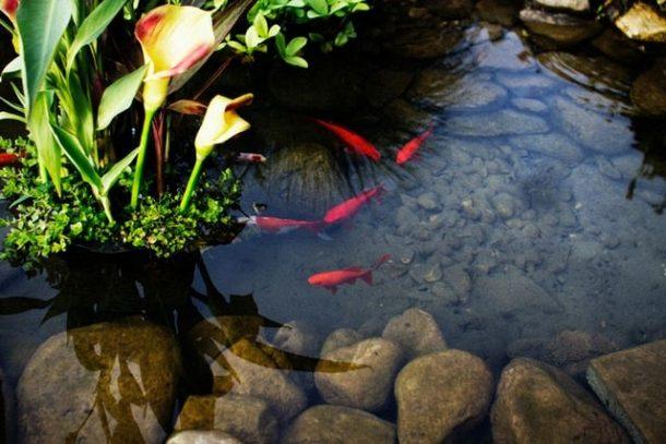 Begini Pandangan Islam tentang Kolam Ikan Depan Rumah!