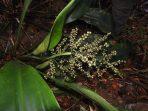 Jelajah Karimata yang Sukses Menemukan Ratusan Spesies Baru Tumbuhan