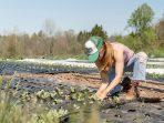 5 Infomasi Penting Perihal Sistem Pertanian Organik