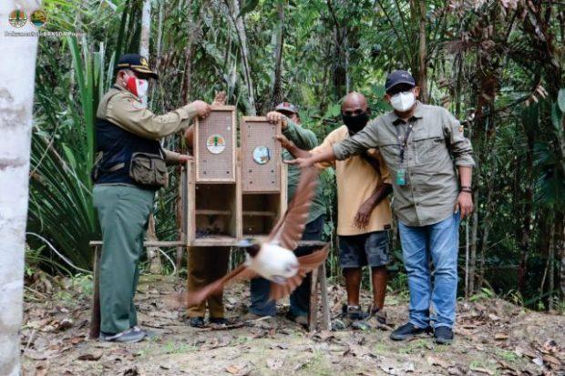 BBKSDA Papua Lepasliarkan Dua Belas Satwa Dilindungi ke Habitatnya