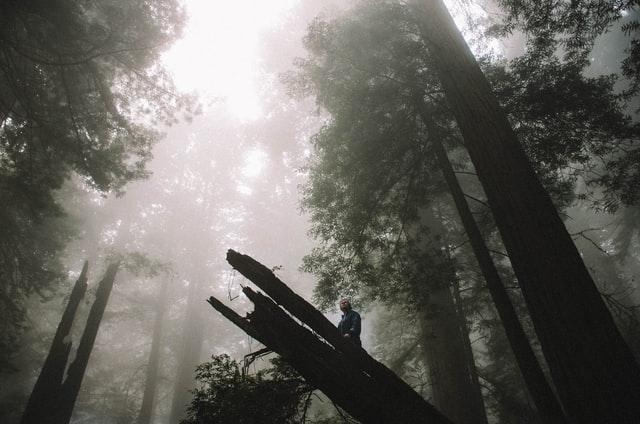 Hutan Kota, Pengertian dan Manfaatnya bagi Lingkungan