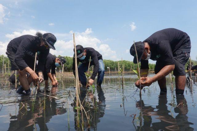 Mempromosikan Adaptasi Berbasis Ekosistem Melalui Restorasi Wilayah Pesisir Terpadu