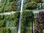 7 Inspirasi Hijau untuk Mewujudkan Taman Vertikal di Rumah