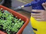 Cara Membuat Pestisida Alami, Penangkal Hama yang Ramah Lingkungan
